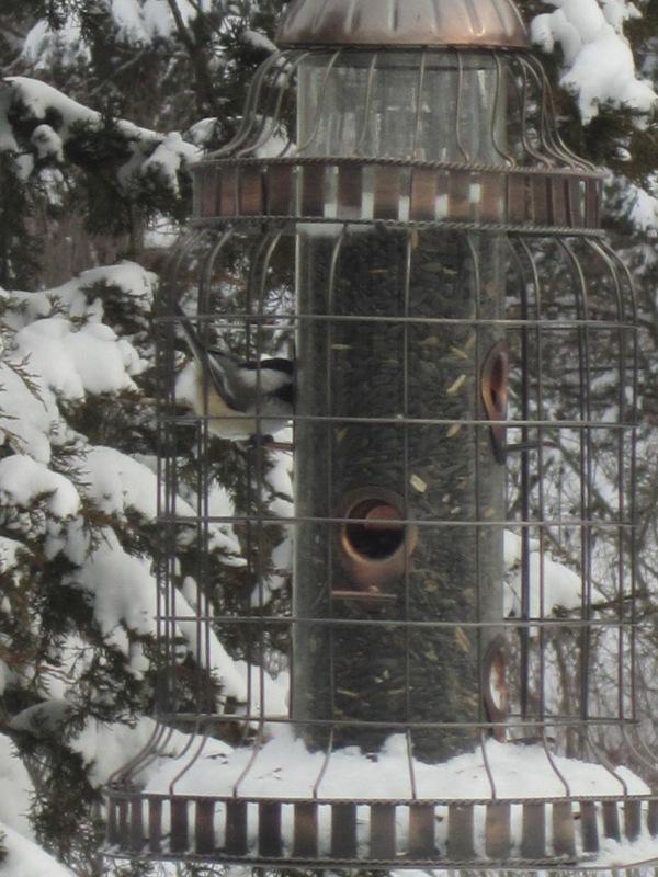 Birds 014