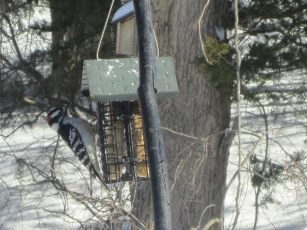 Birds 035