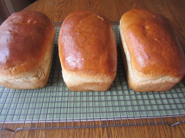 Bread 031